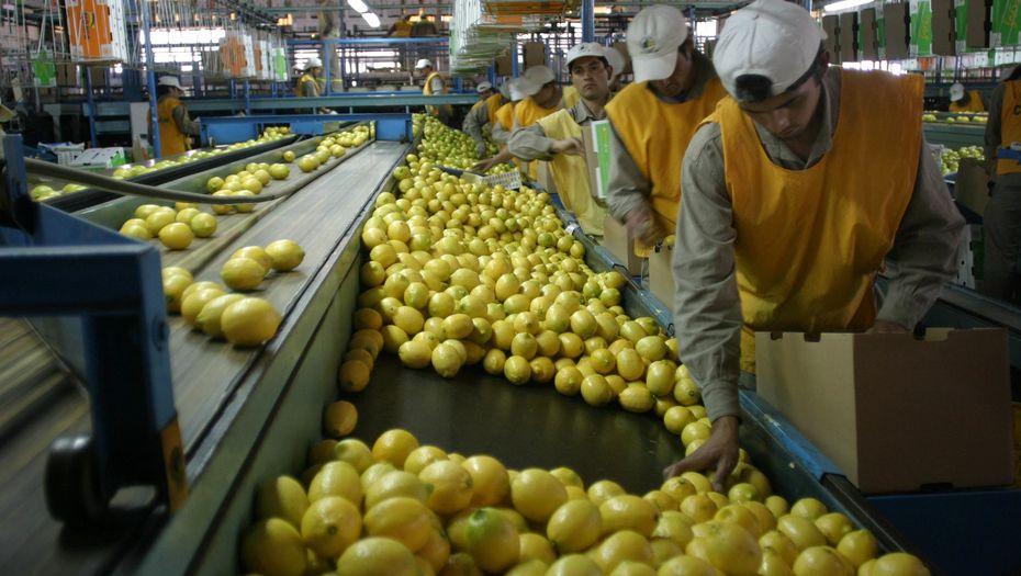 El Gobierno confirmó la reapertura del mercado brasileño para cítricos argentinos