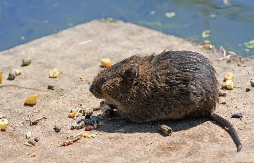Nene murió tras comer galletitas con veneno para ratas