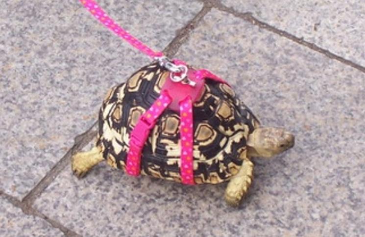 La multaron por pasear una tortuga — Cuarentena