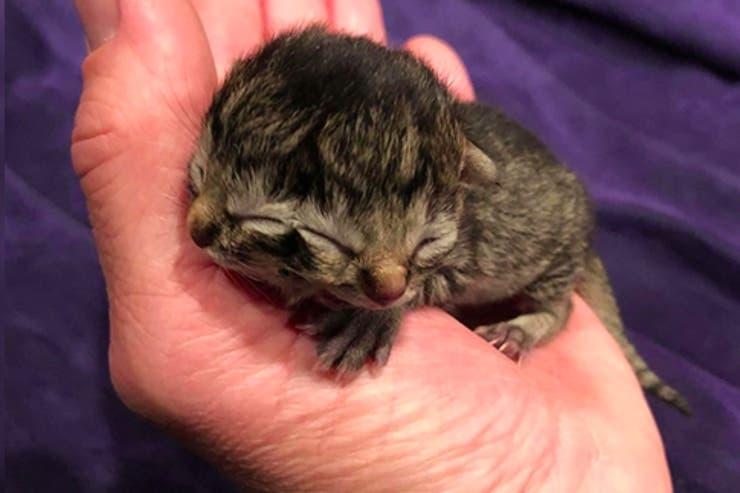 Nació un gato con dos caras — Insólito