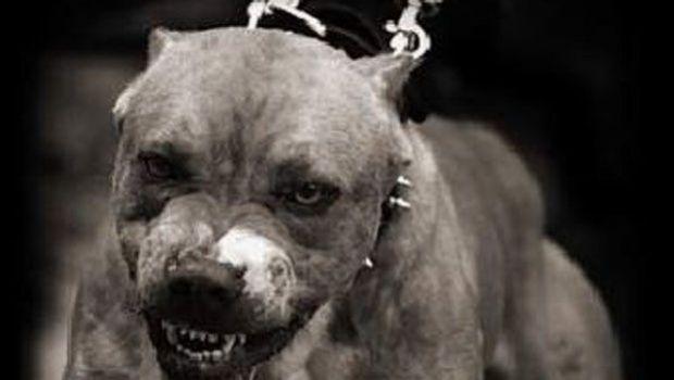 Se suicidó el dueño del pitbull que atacó a un niño en Capital