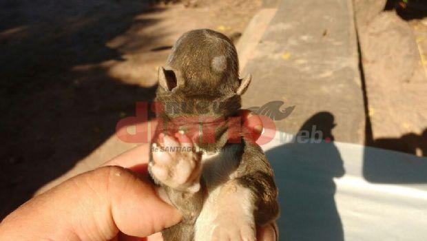 Insólito: Nació un perro sin ojos, orejas ni nariz