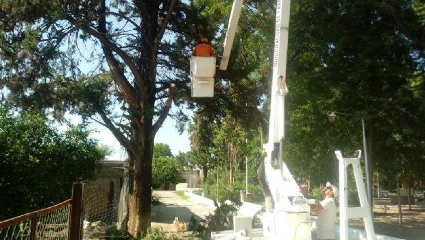 Realizan poda de árboles y limpieza de calles en Chumbicha