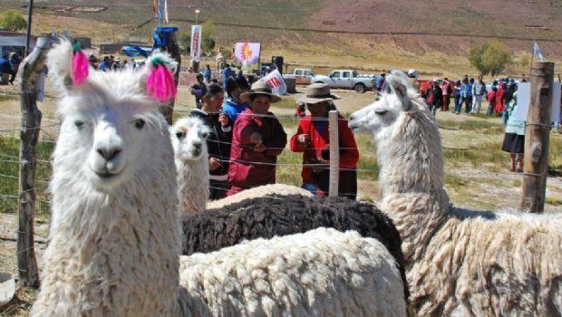 La Puna está de fiesta: comenzó la Feria Artesanal y Ganadera